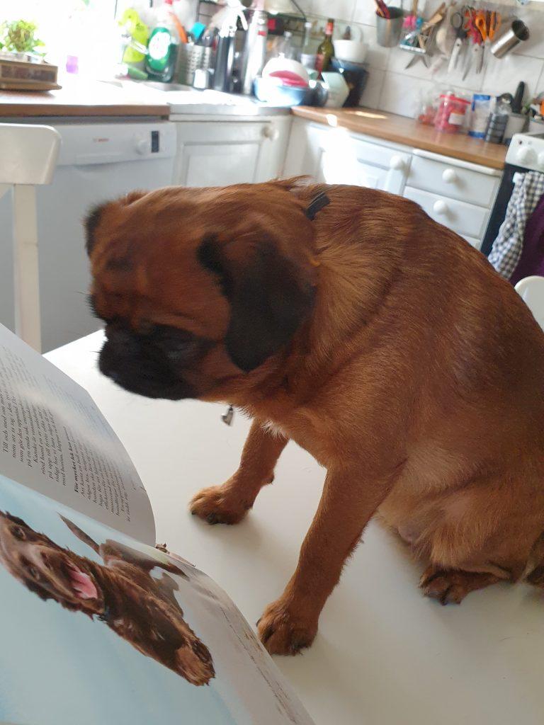 Ingela och griffisarna_hunden Hedda läser
